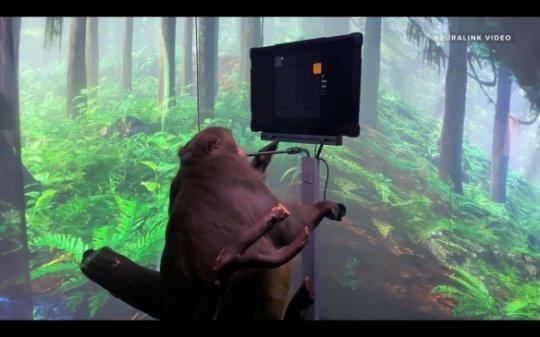 马斯克公布动物用脑机接口使用手机视频